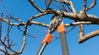Benefits of Proper Tree Maintenance