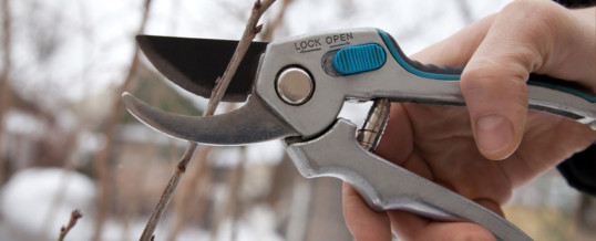 Winter Pruning: The What's Why's and How's