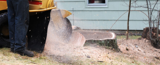 The Stumps Have Got to Go: 4 Reasons to Get Rid of the Stumps in Your Yard
