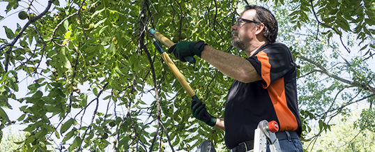 Avoid the Dangers of DIY Tree Care
