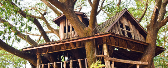 Building a Giving Tree House