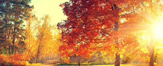 Fall Tree Tips from the Pros