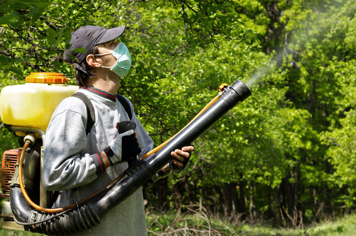 Certified arborist treating tree disease