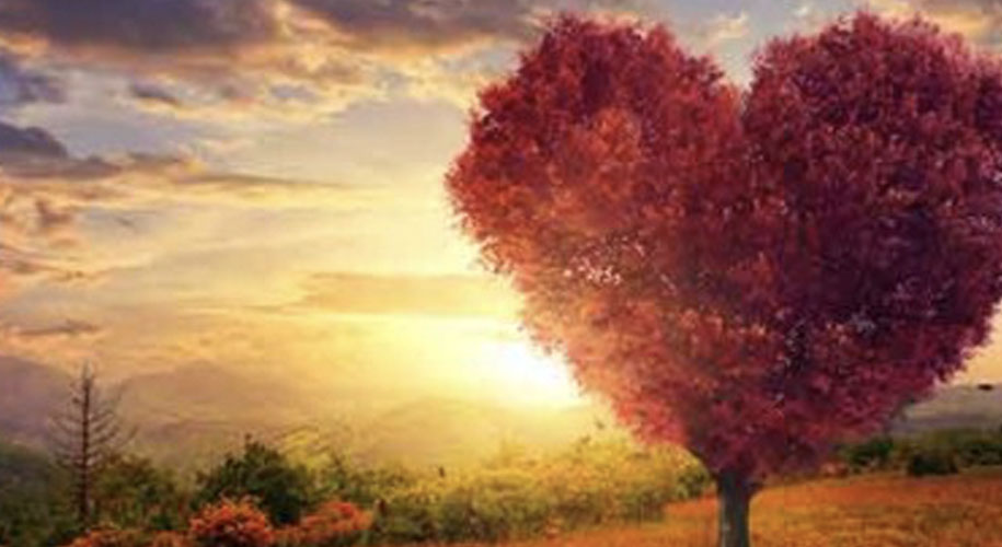 Tree scape heart