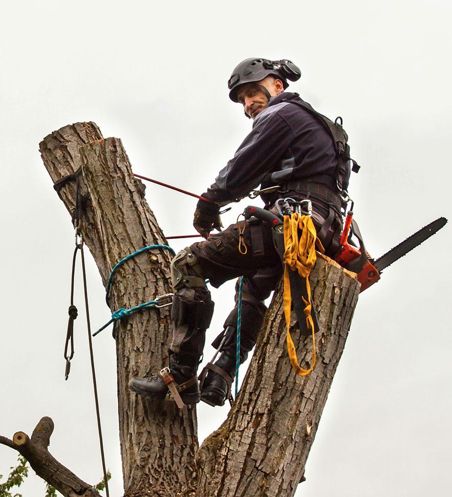 Arborist installing tree cables